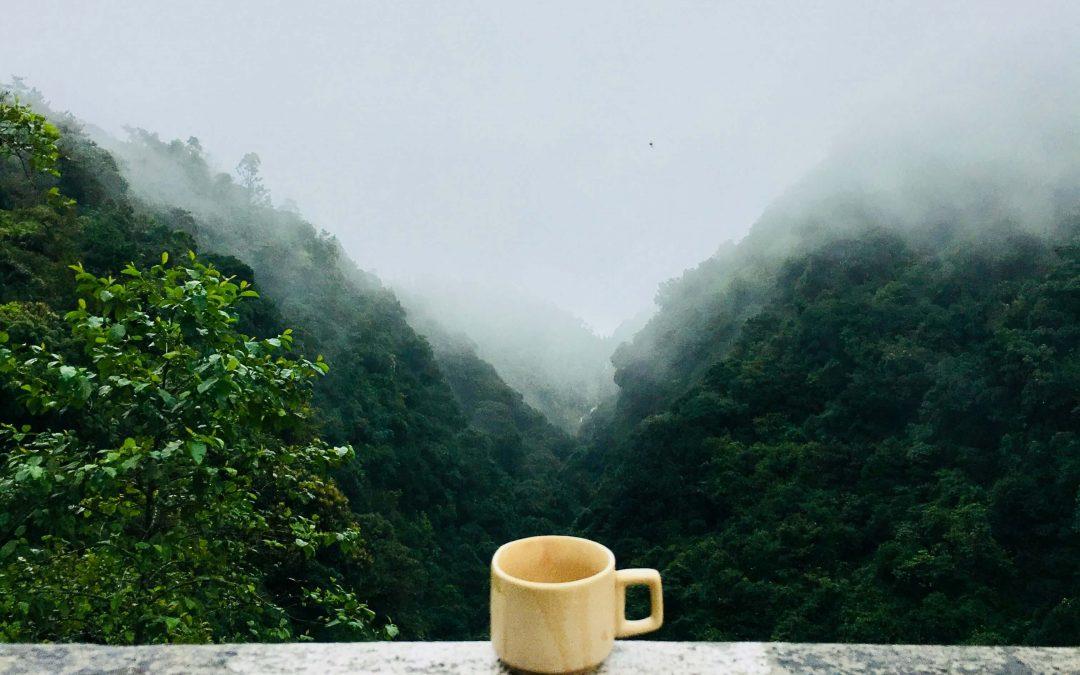 Čaj – zázrak mladosti