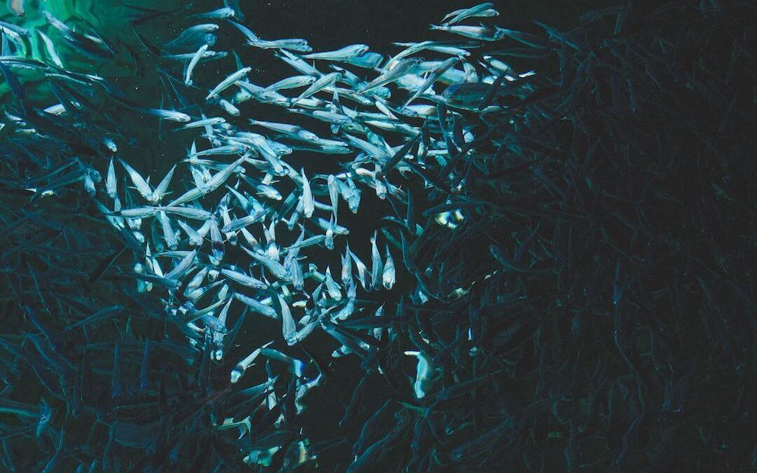 Sardinky – Účinná superpotravina